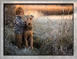 Trzciny, Airedale terrier, Pies, Chłopiec, Trawy